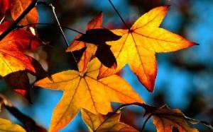 AutumnLatestNews